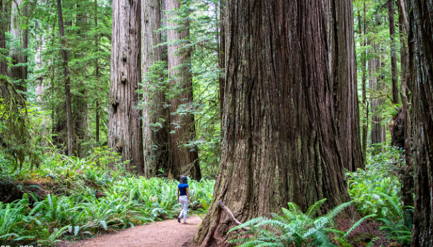 Best State Parks in California